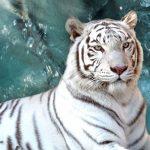 1日で遊びきれない!東武動物公園で遊園地も動物園もプールも!
