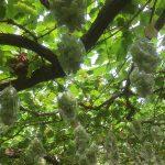 小松沢レジャー農園でブドウ狩りマスつかみ蕎麦打ちやってきました
