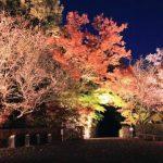 夜も綺麗!埼玉でライトアップされた紅葉が楽しめるスポット
