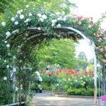 バラと桜の名所『与野公園』でピクニックや散策はいかが?