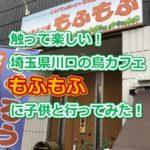 触って楽しい!埼玉県川口の鳥カフェもふもふに子供と行ってみた!フクロウ・オウム・インコがかわいすぎる