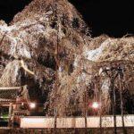 埼玉で絶対にハズせない桜の名所5選 家族でお花見に出かけよう!