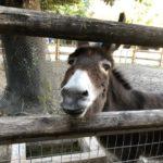 【狭山市】こども動物園にアスレチック、自然豊かな智光山公園