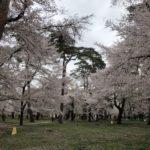 大宮公園でお花見2021バージョン